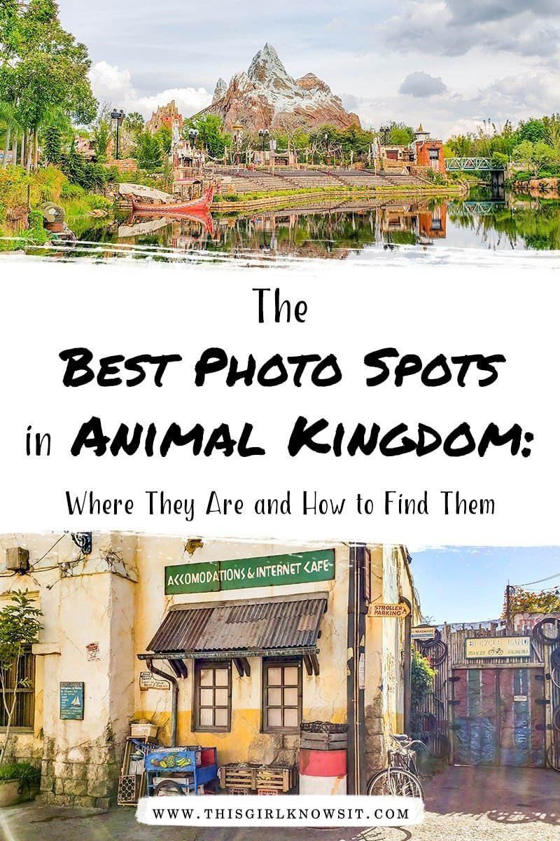 An Instagrammer's Guide to Animal Kingdom